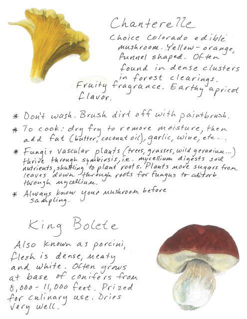 Mushrooms.indd