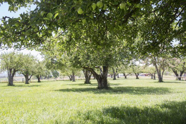 orchard rgb